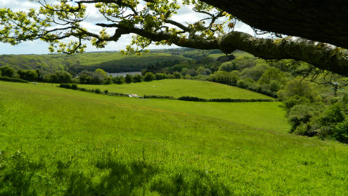 South West land values and the current market - Stags
