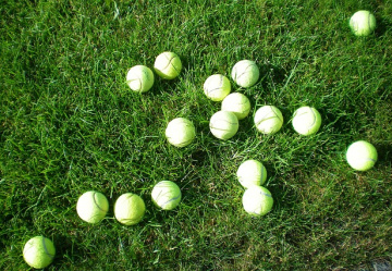 Battersea animal charity in tennis ball appeal